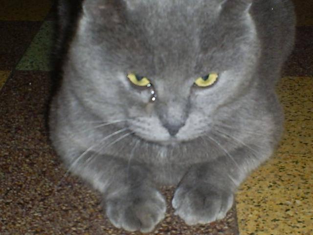 Chat leo -   (0 mois)