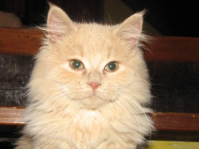 Chat les chats+mésanges 012.jpg -   (0 mois)