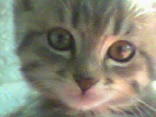 Chat pistache -   (0 mois)