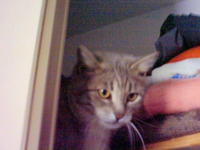 Chat Chat de gouttière \