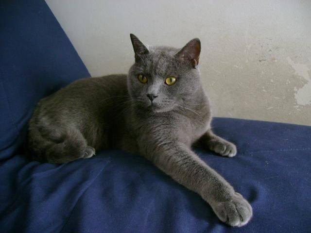 Résultat d'images pour Les  plus beaux chats du monde