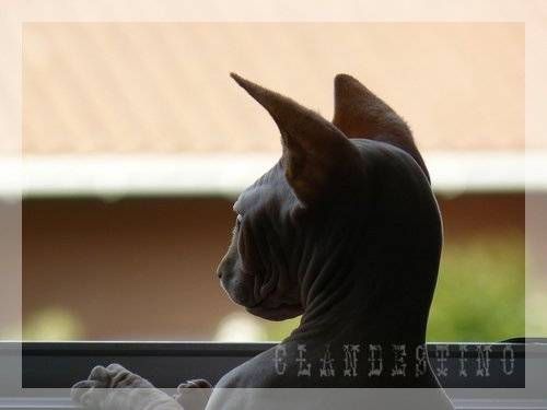 Chat Article 22.jpg -   (0 mois)