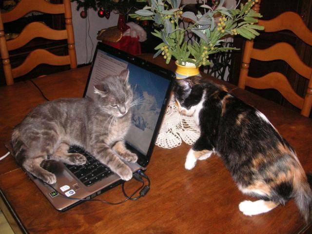 Chat Mistigri et Calinou -   (0 mois)