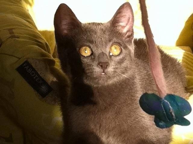Chat Guenievre    -   (0 mois)