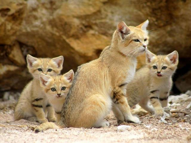 Www africain chatte pics com