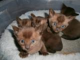 d'adorables chatons disponibles