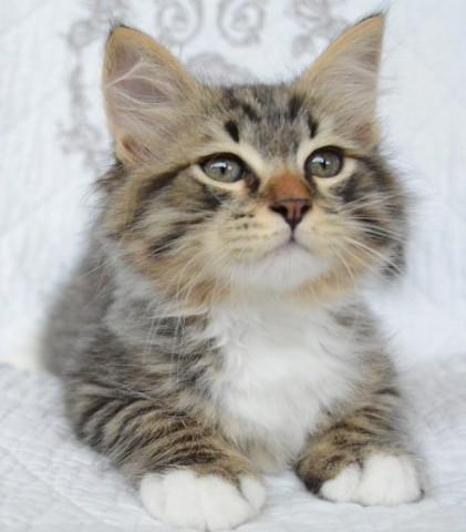 Chatterie de Nice, trouve un petit chaton