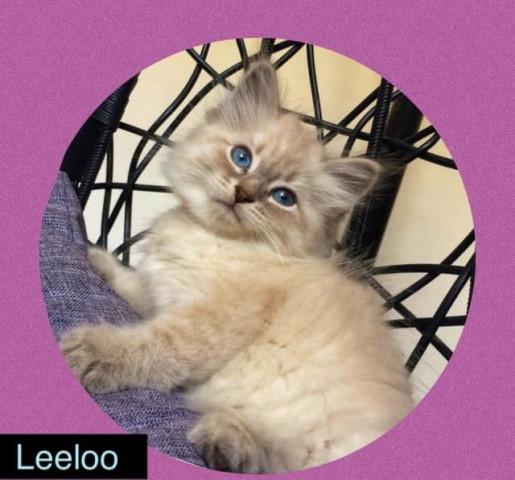 Leloo